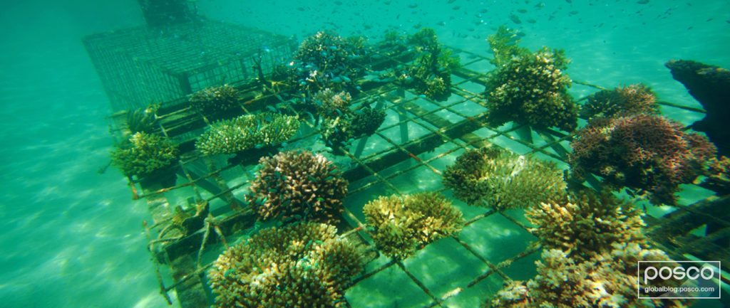 An example of an artificial reef used to support plant growth