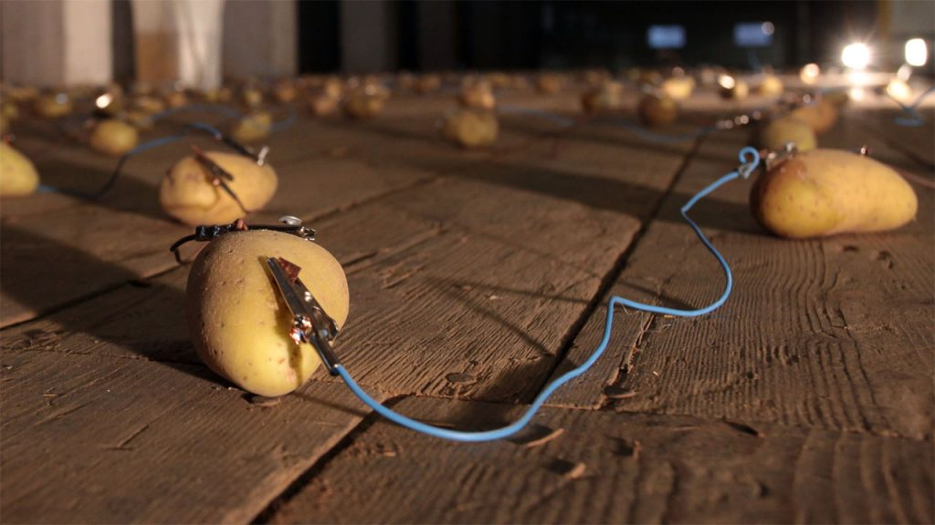 A lightbulb lights up thanks to a simple potato battery cell.