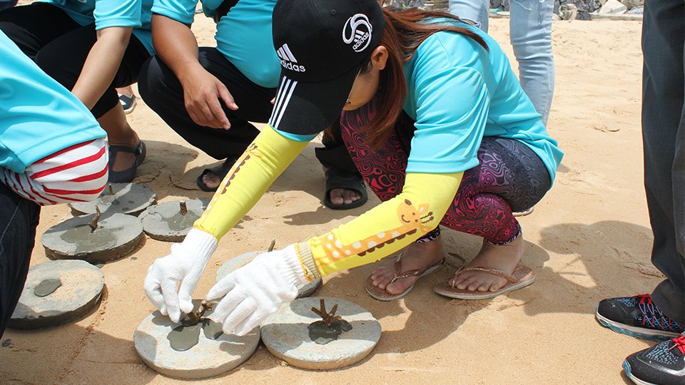 POSCO_employees_planting_baby_corals