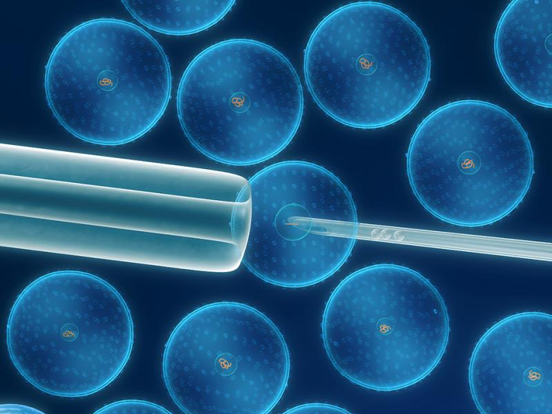 세포들을 현미경으로 확대한 모습.