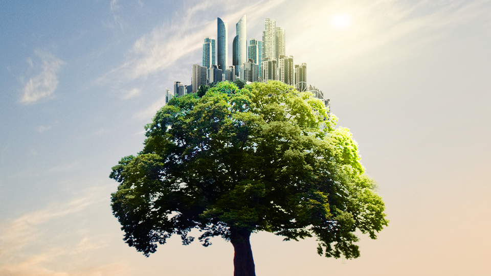 아름드리 나무가 정중앙에 있고 나무 위로 찬란한 햇빛을 받으며 높은 건물이 모여있는 도시 이미지