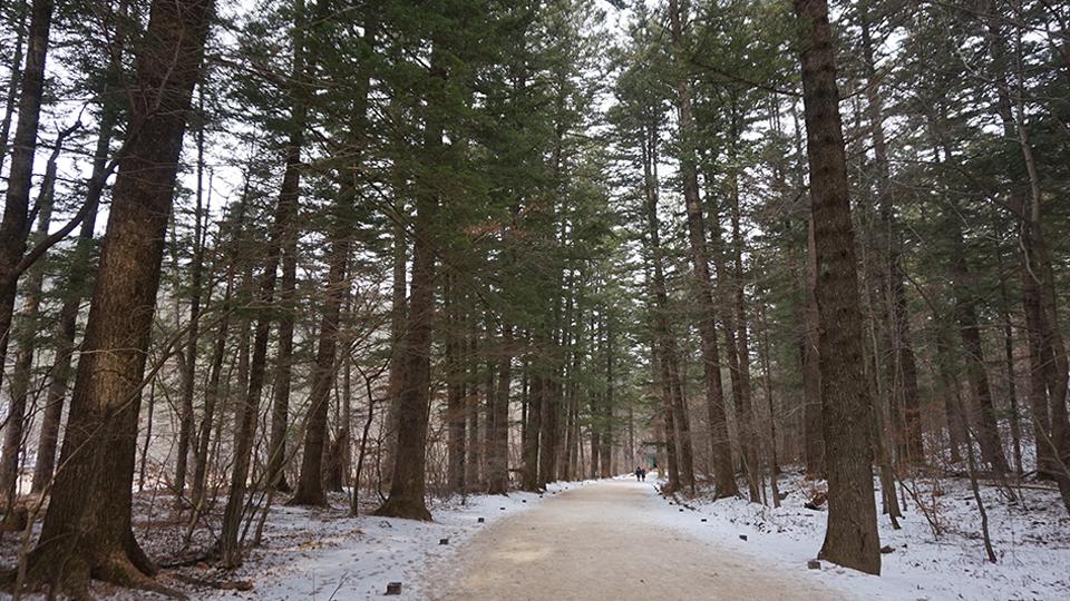 월정사 전나무숲길