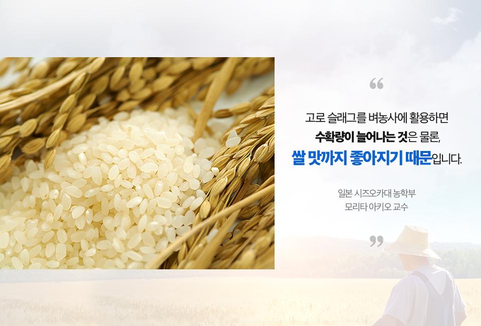 정제된 쌀 사진. (고로 슬래그를 벼농사에 활용하면 수확량이 늘어나는 것은 물론, 쌀 맛까지 좋아지기 때문입니다. 일본 시즈오카대 농학부 모리타 아키오 교수)