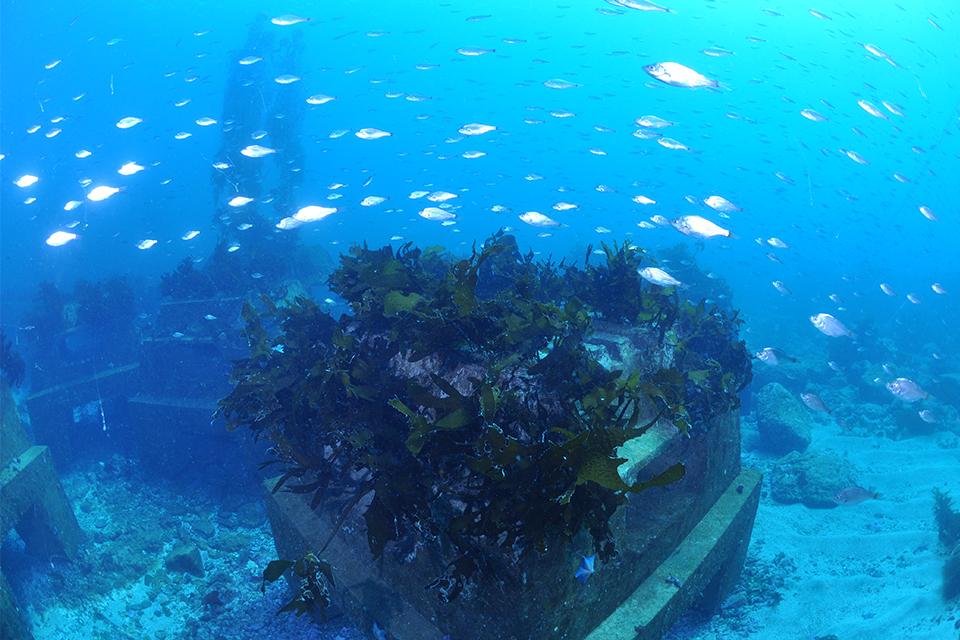 인공어초 트리톤 사진
