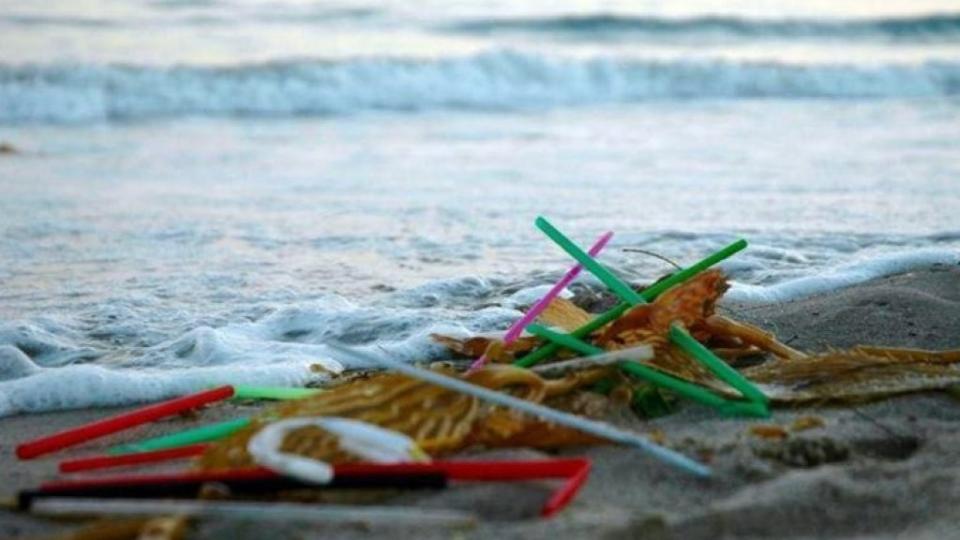 해안으로 밀려들어온 플라스틱 빨대 쓰레기