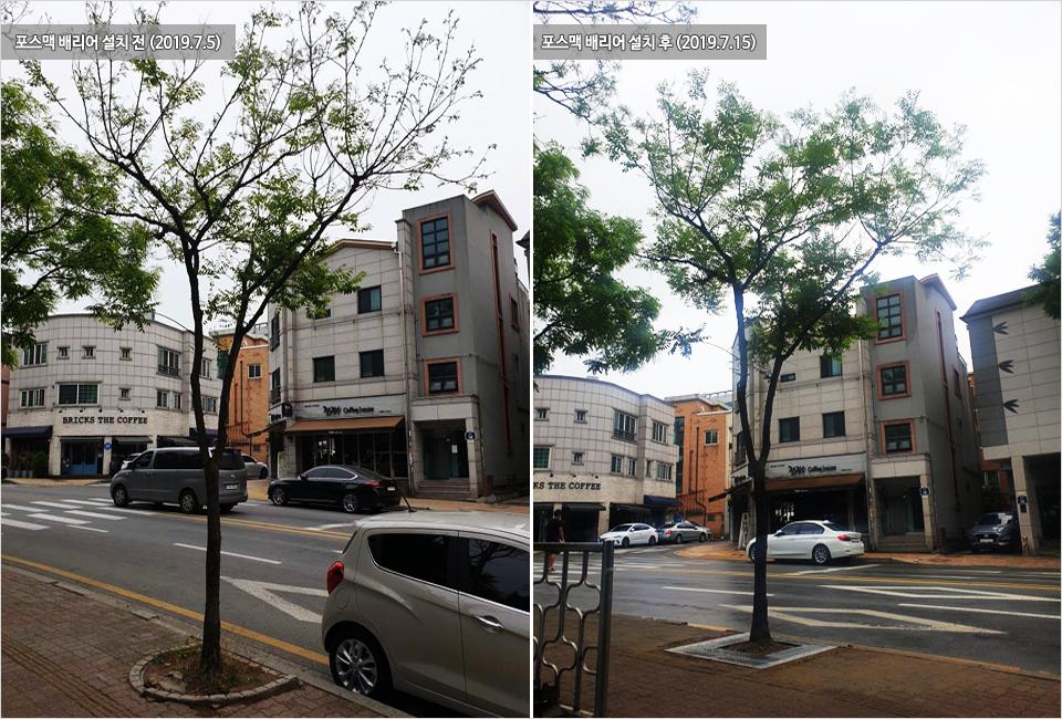 왼쪽, 2019년 7월 5일 포스맥 배리어 설치 전의 나무 사진. 오른쪽 2019년 7월 15일 포스맥 배리어 설치 후의 나무 사진. 잎이 풍성해진 모습.