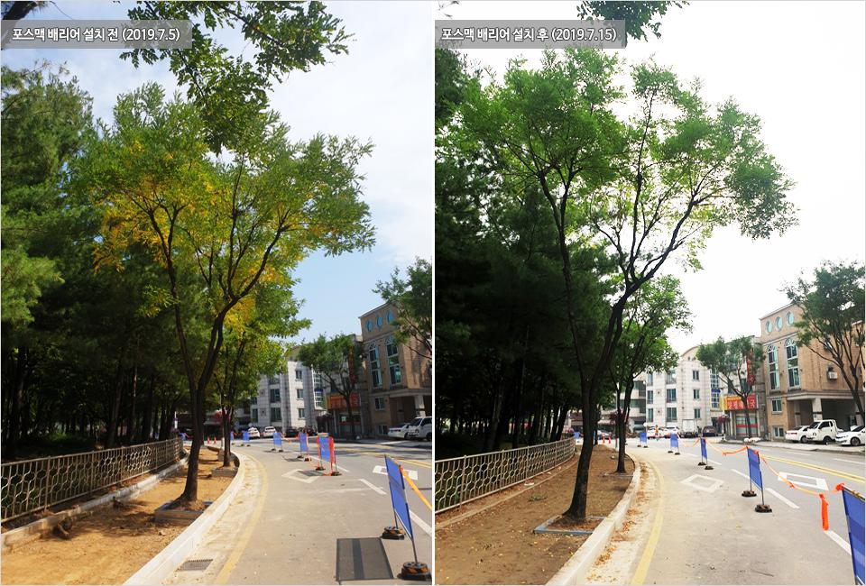 왼쪽, 2019년 7월 5일 포스맥 배리어 설치 전의 나무 사진. 오른쪽 2019년 7월 15일 포스맥 배리어 설치 후의 나무 사진. 잎의 색깔이 푸르게 변해있는 모습.