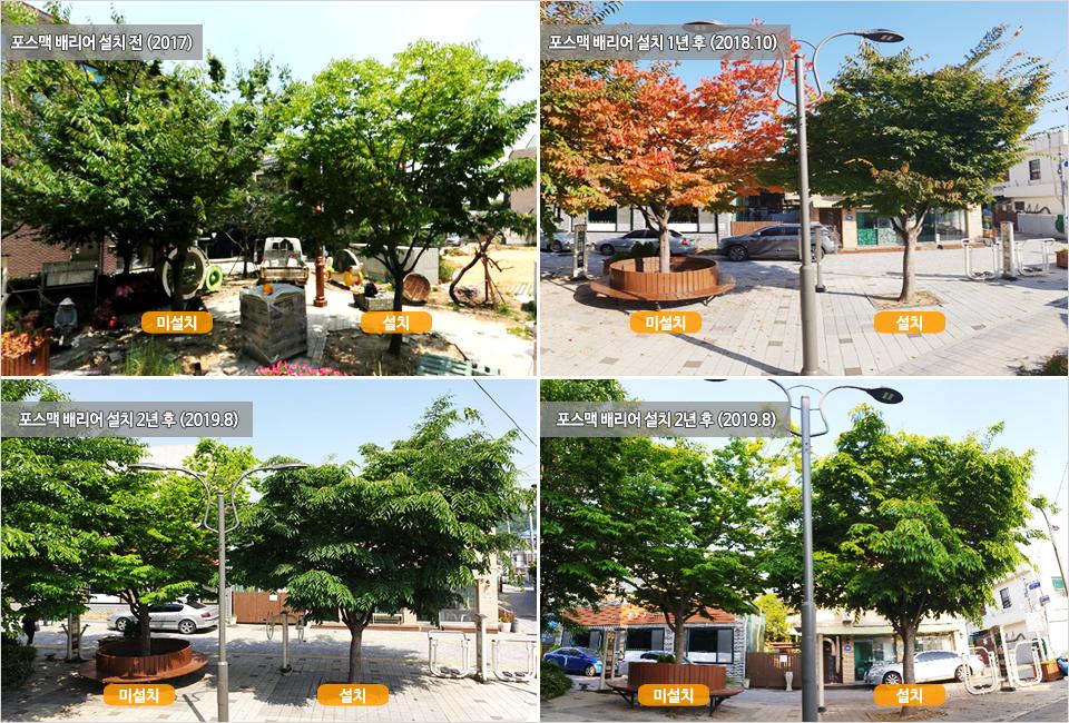 상단 왼쪽, 2017년 포스맥 배리어를 설치하지 않은 나무와 설치한 나무의 사진. 상단 오른쪽, 2018년 10월 포스맥 배리어 설치 1년 후 나무 비교 사진. 하단, 2019년 8월 포스맥 배리어 설치 2년 후 나무 비교 사진.