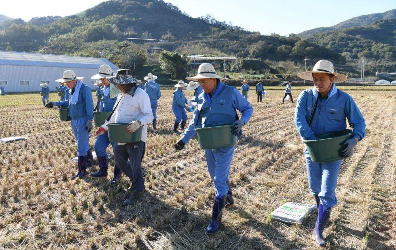 포스코 최정우 회장(사진 가운데)이 직원들과 함께 10월 30일 전남 광양시 진월면에서 '규산질 슬래그 비료 뿌리기 봉사활동'을 하는 모습